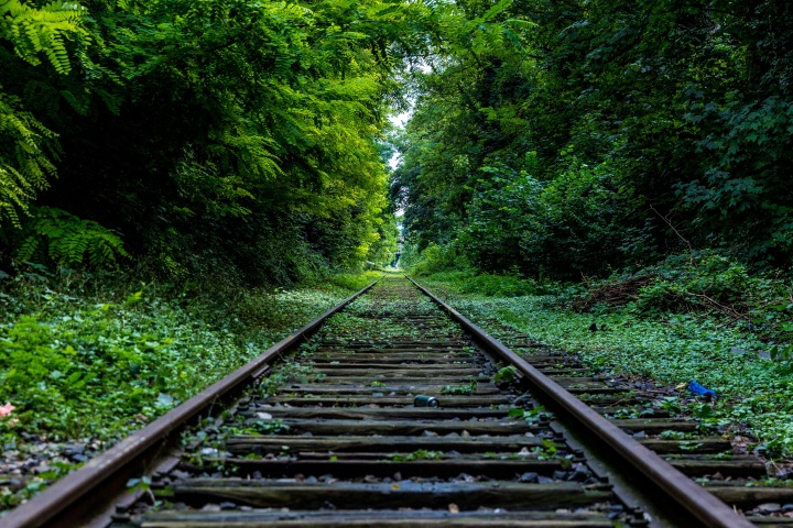 railroad track into woods
